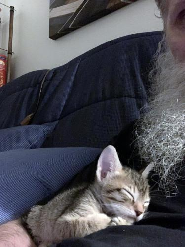 2021-05-16-Little-Kitty-with-Poppy-03