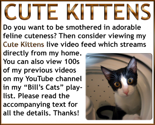 cute-kittens-live-video-feed-optimized