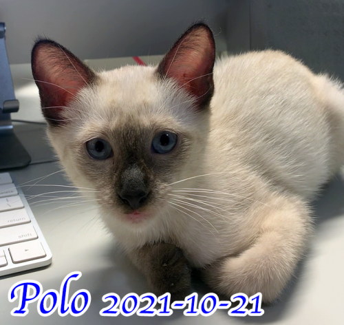2021-10-21-polo-720x680-with-text-optimized